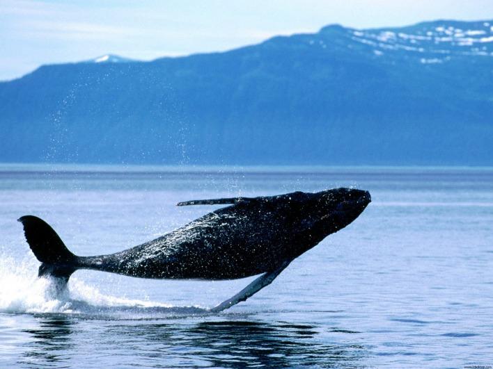 рыбалка в океане кит