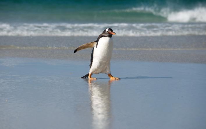 pingvini-prostitutki-kamni