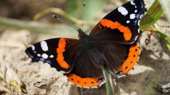 природа животное насекомое бабочка макро
