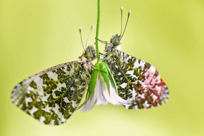 природа бабочки цветы насекомые животные макро