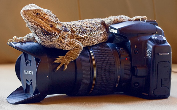 животные техника Tamron фотоаппарат animals technique the camera