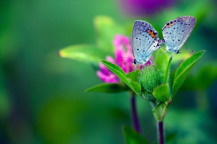 Бабочки растение макро