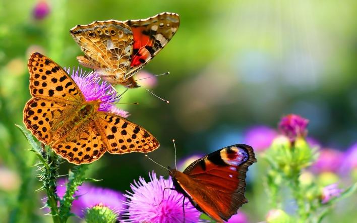 бабочки макро растения