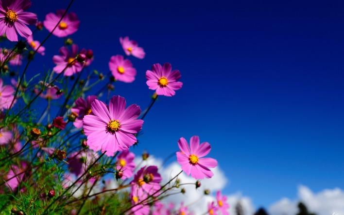картинки на экран рабочего стола цветы № 523474 бесплатно