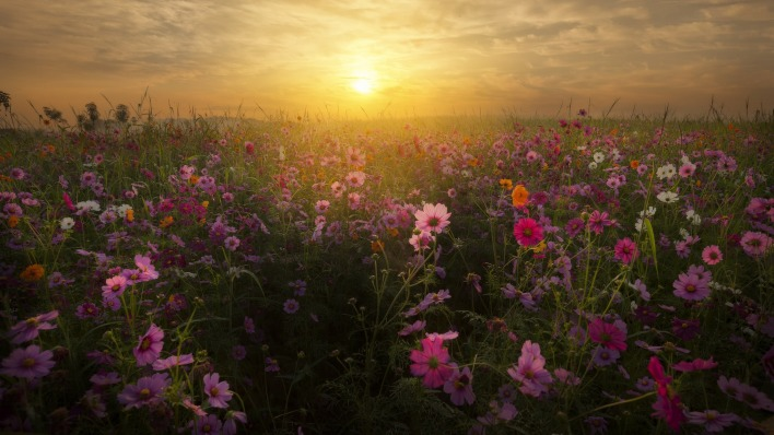 поле цветы рассвет field flowers dawn
