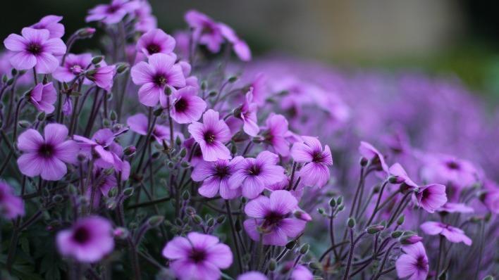 обои для рабочего стола природа цветы № 509995 бесплатно