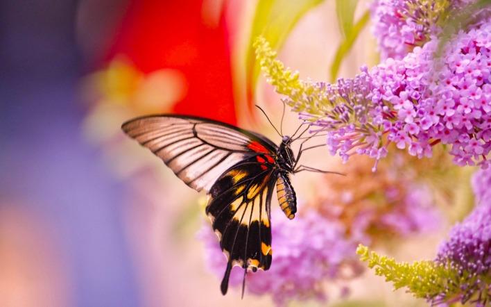 бабочка цветок макро