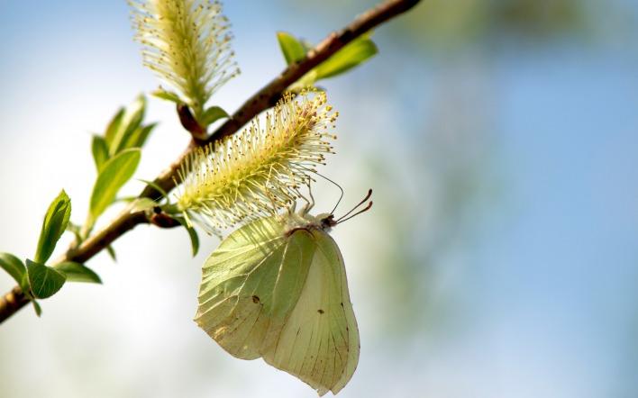 Бабочка цветение макро