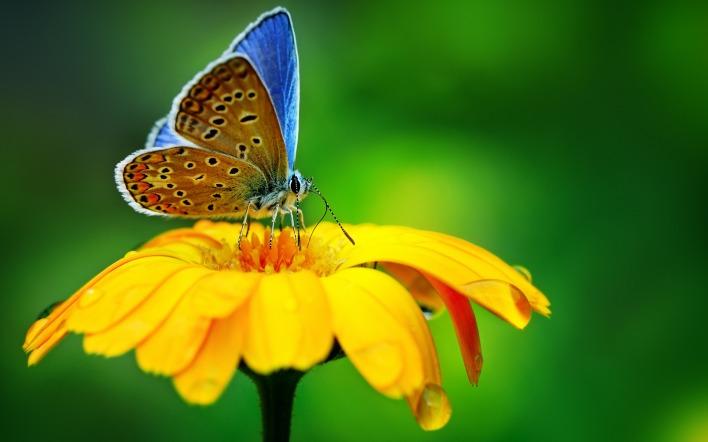 бабочка цветок желтый