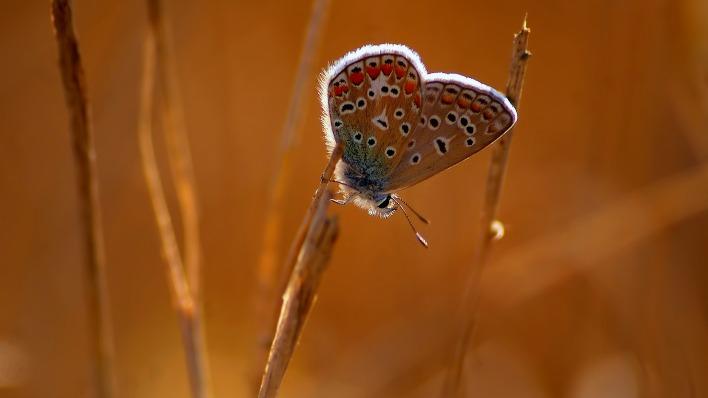 природа животные насекомое бабочка макро