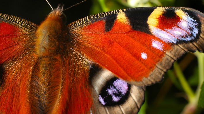 природа животные насекомое бабочка узоры