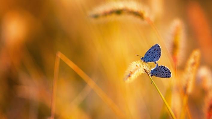 природа животные бабочки насекомое