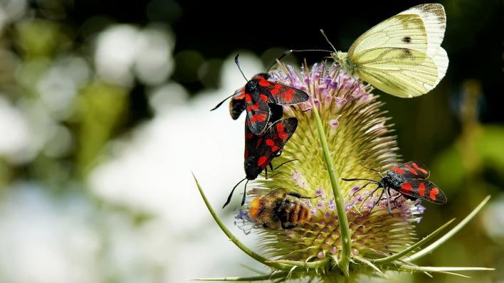 природа животные насекомое макро бабочки nature animals insect macro butterfly