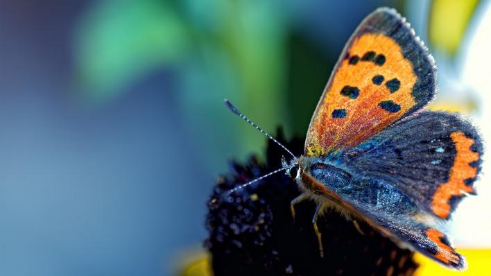 природа животные насекомое бабочка nature animals insect butterfly