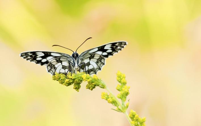 бабочка травинка butterfly a blade of grass