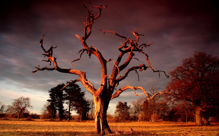 Картинка высохшее дерево