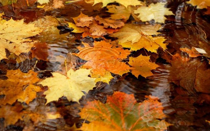 ловля под опавшими листьями