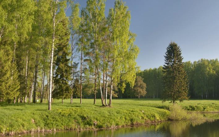 Картинка озеро поле лес