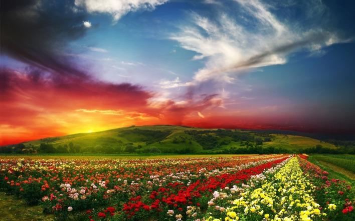 Картинка поле цветов