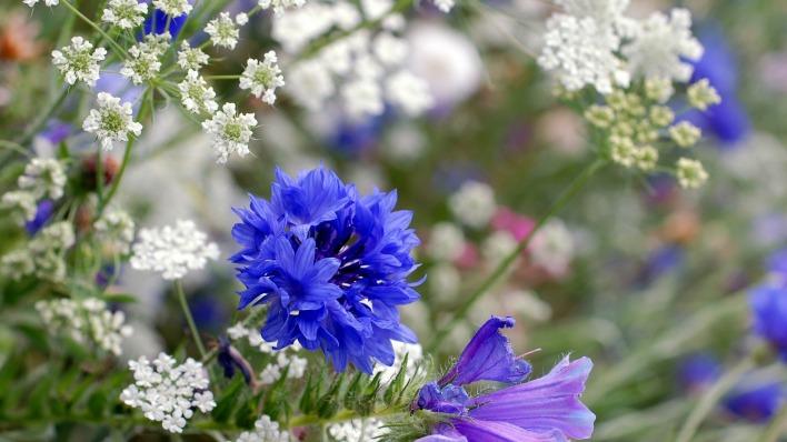 Картинка на рабочий стол луговые цветы
