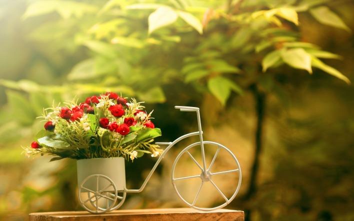 картинки на рабочий стол август цветы № 409654  скачать