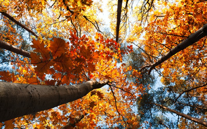 Дерево листья деревья осень
