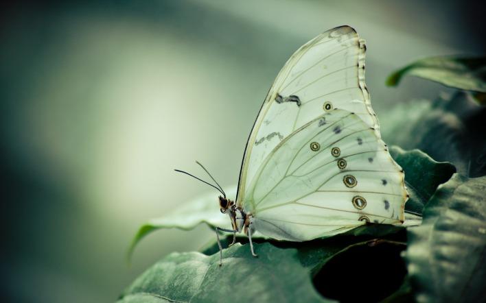 природа животные бабочка макро