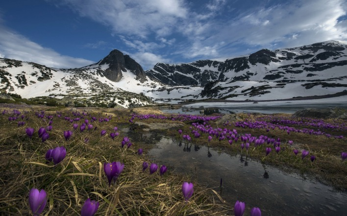 природа горы цветы трава река nature mountains flowers grass river