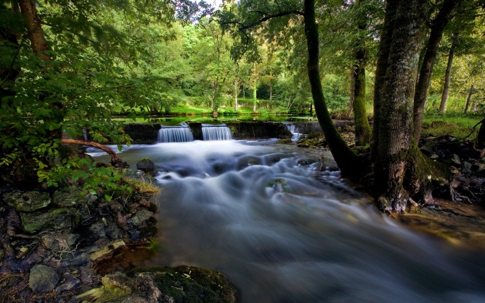 природа река деревья лес nature river trees forest