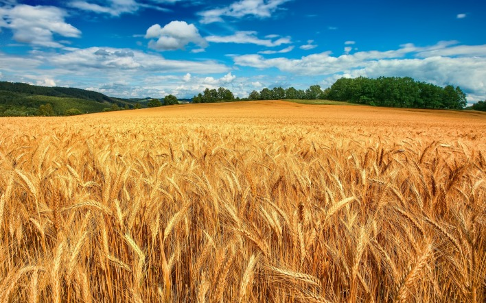 природа поле пшеница небо облака nature field wheat the sky clouds