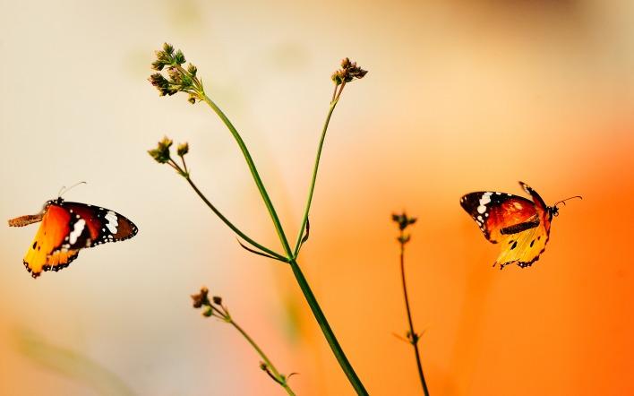 природа животные насекомое бабочки ветка nature animals insect butterfly branch