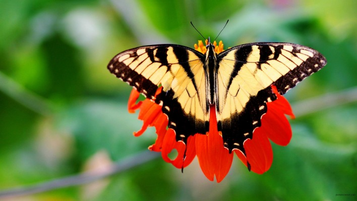 природа животные насекомое бабочка цветы nature animals insect butterfly flowers