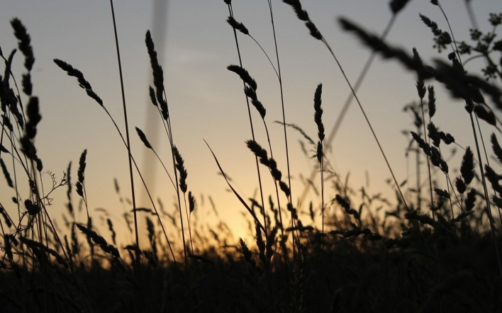 природа трава восход nature grass sunrise