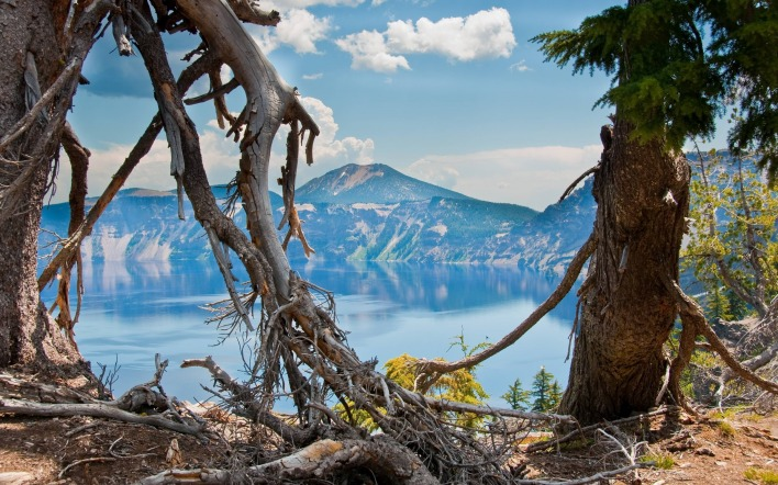 горы озеро деревья корни mountains the lake trees roots