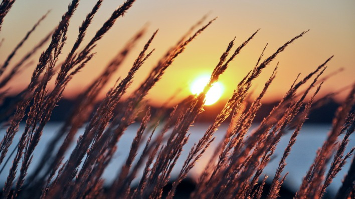 природа солнце закат трава nature the sun sunset grass