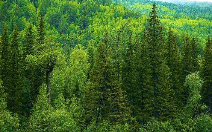 лес зелень лето