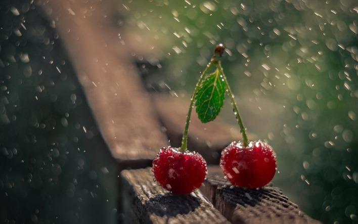 ᐈ Дождь природа фото, фотографии природа дождь | скачать на ... | 443x708