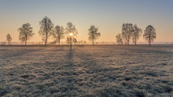 поле деревья небо закат