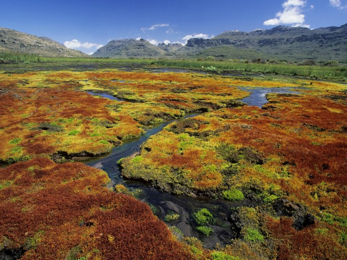 Colorful Mosses, Cedarberg Wilderness Area, Northern Cape, South Africa