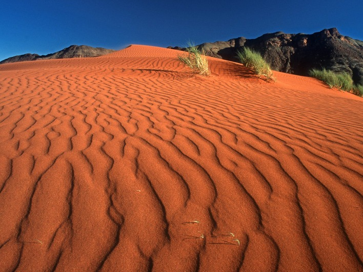 Crawling on the Dune, Namib Rand Nature Reserve, Namibia