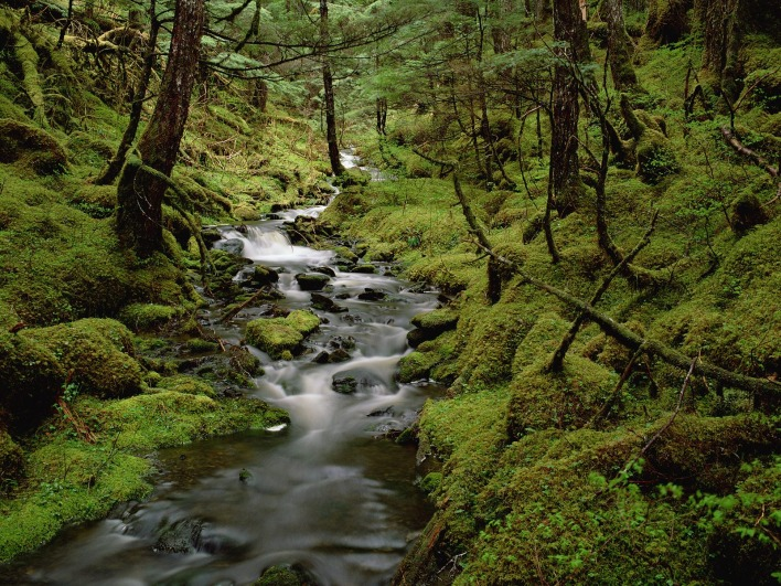 Temperate Rainforest, Cordova, Alaska