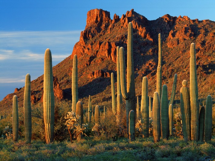 Alamo Canyon, Organ Pipe Cactus National Monument, Arizona
