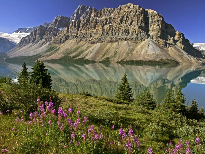 Bow Lake and Flowers, Banff National Park, Alberta, Canada