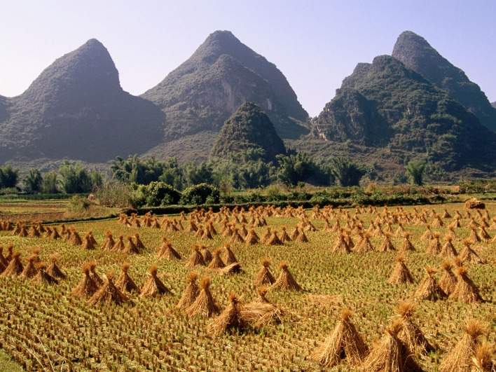 Harvested Rice Field, Li River Area, Yangshuo, Guangxi Province, China