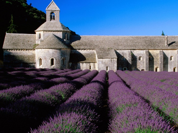 Lavender Field, Abbey of Senanque, Near Gordes, Provence, France