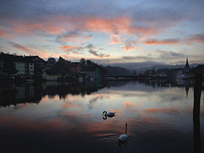 Swans on the Rhine River at Sunset, Schaffhausen, Switzerland
