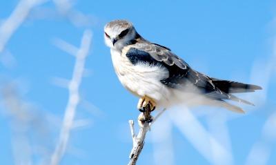 Скачать обои птица, сокол, природа бесплатно для рабочего стола в разрешении 1920x1280 - картинка 374162.