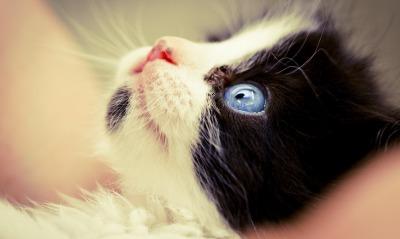 котенок мордочка глаза взгляд