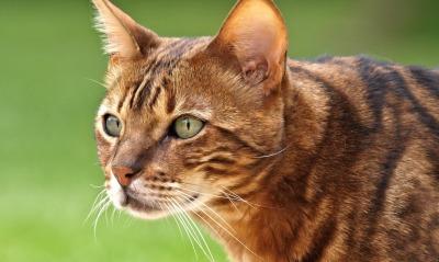кошка взгляд глаза