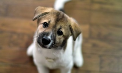 щенок глаза взгляд